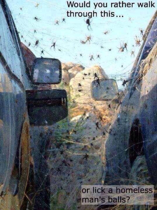 Spinnenfobie