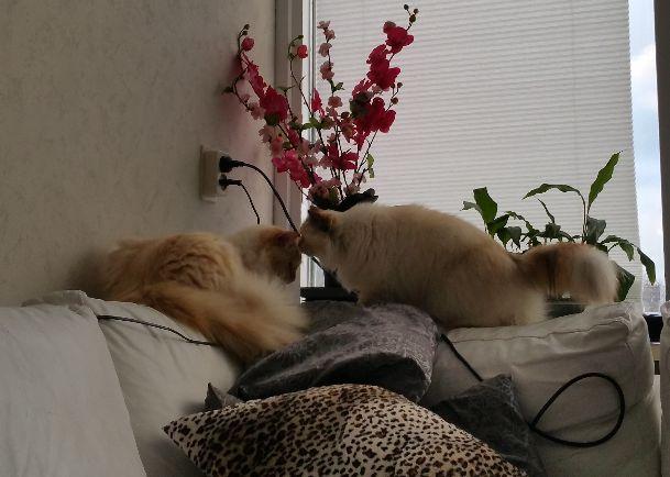 Huisdieren 5