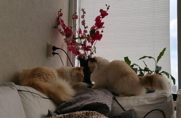 Huisdieren 8