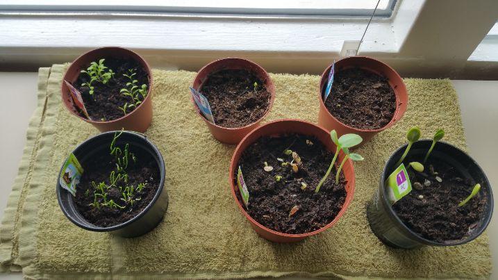 11 mei planten